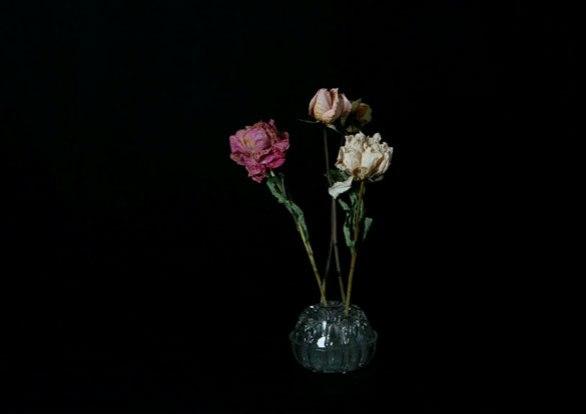 plantes_4